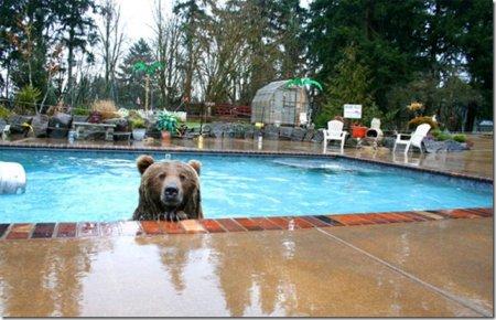 Человек, живущий с медведем гризли