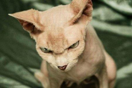 Злые коты