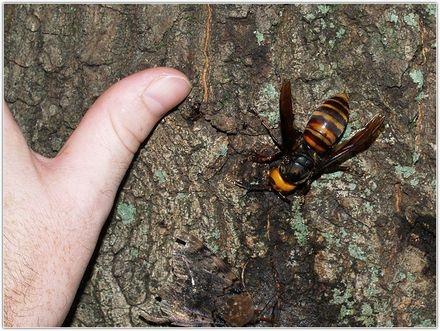 Топ-5 самых опасных насекомых