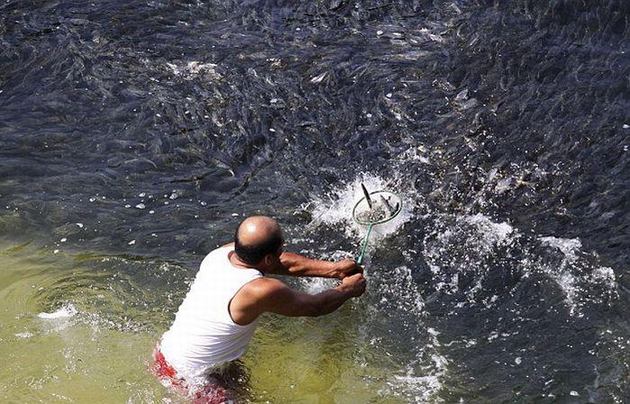 Необычное скопление рыбы в Акапулько (Мексика)