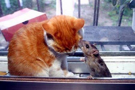 Котик и мышка