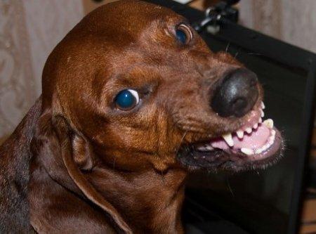 Собаки из мести до смерти загрызли своего хозяина