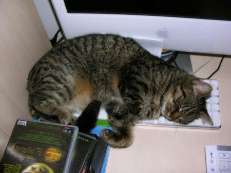 Коты спят на клавиатурах