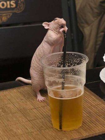 Пьяное зверье