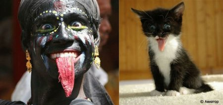 Сравним выражения лиц людей и животных