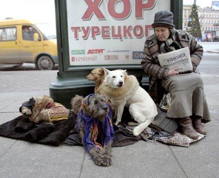 Депутаты взялись за домашних животных