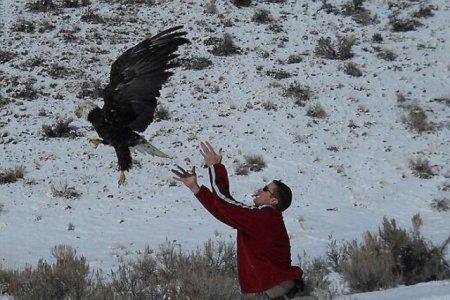 Орел влетел в лобовое стекло