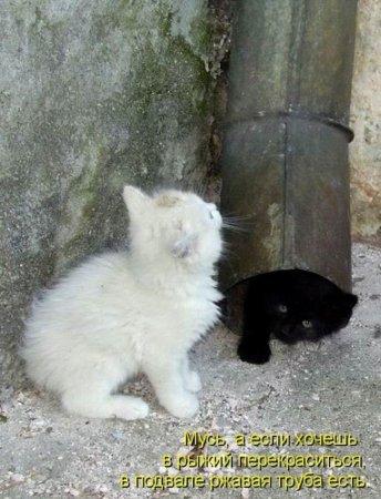 Котиные истории