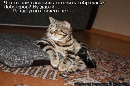 Котоматрицы-40