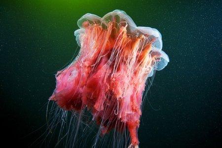 Невероятные существа Белого моря (27 фото)