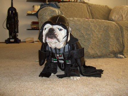 Собаки - звездные вояки
