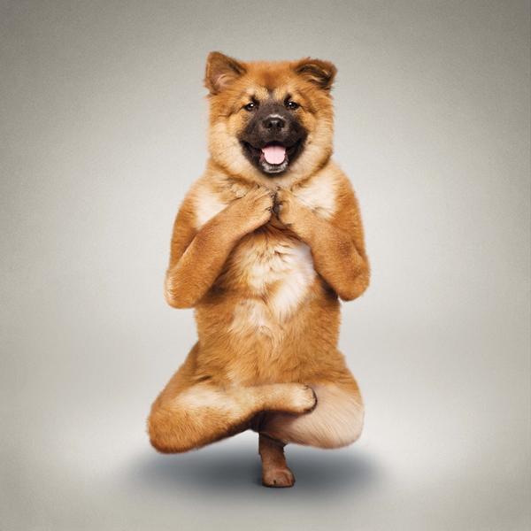 Йога для животных