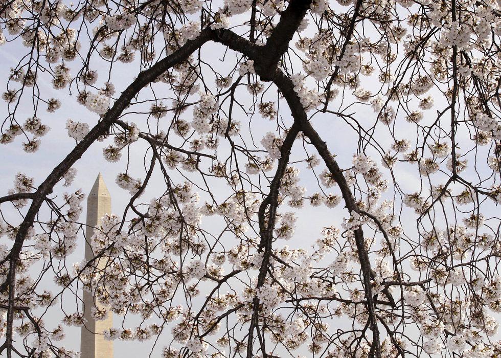 Фотоподборка дня: 5 апреля