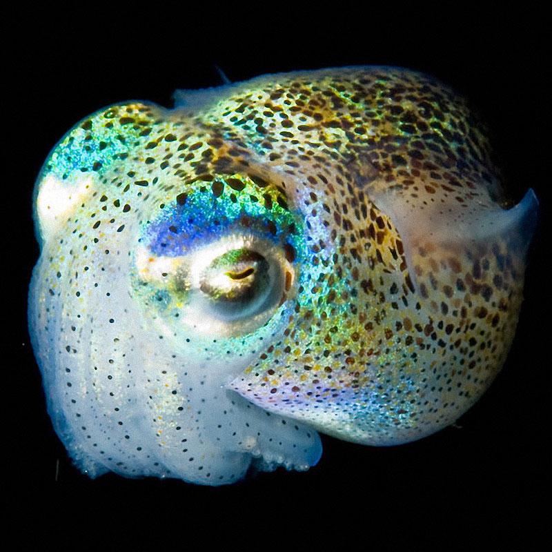 Светящиеся существа из морских глубин
