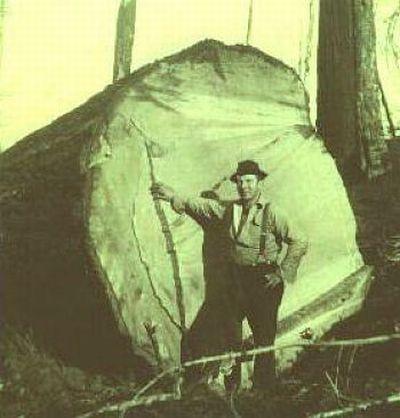 Из истории лесорубов
