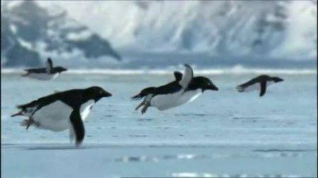 Пингвины улетают на юг