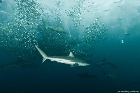 Симфония подводного мира... Фотограф Alexander Safonov