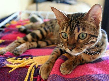 10 распространённых мифов о кошках
