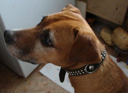 В Уручье найдена дорогая собака!