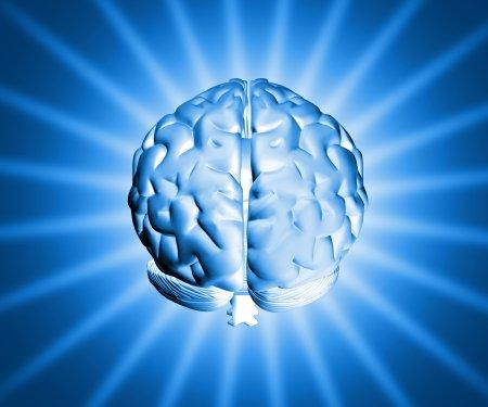 20 отличий женского от мужского мозга