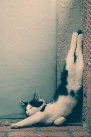 Самые смешные и нелепые позы котов