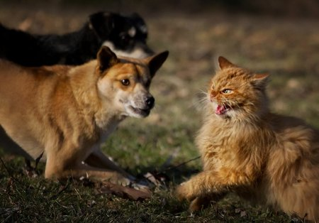 Кошачий триллер