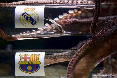 Осьминог Икер предсказал выход «Реала» в финал Лиги Чемпионов