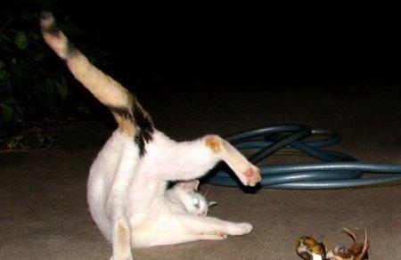 Коты в интересных позах