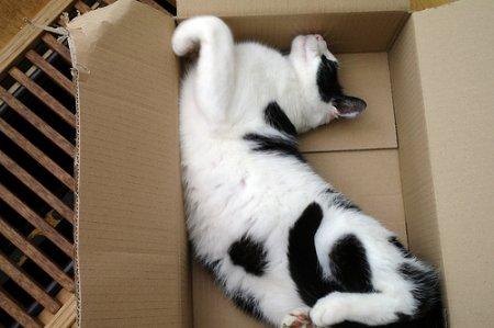 Полная коробка кота