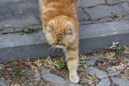 Осторожно! Во дворе злой кот!