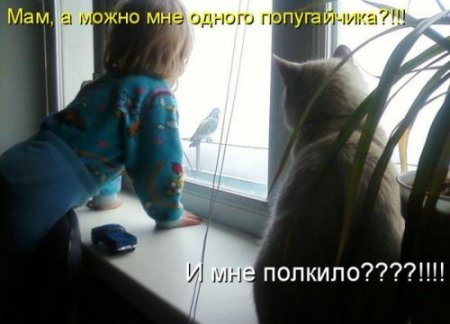 Забавные животные (Фото, видео)