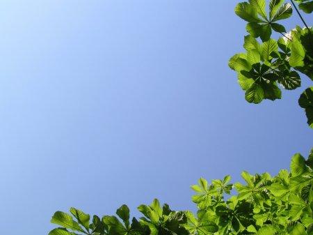 Лето на картинках