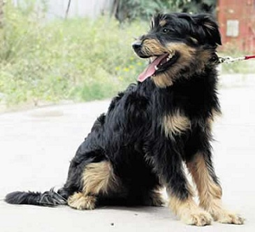 Собаку посчитали реинкарнацией юриста и приговорили к смерти