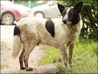 В Саратове пес два года ждет хозяев на месте снесенного дома