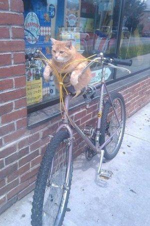 В магазинах продаются коты