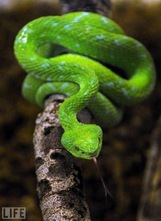 Такой разный зеленый цвет (36 фото)