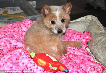 Первый в мире пес на 4-х бионических ногах