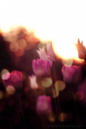 Вдохновение Весны... Фотограф Ruta Kukharenko