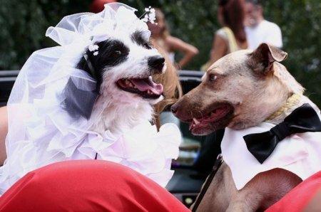 Зверюшкины свадьбы
