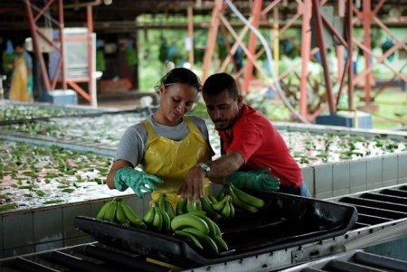 Как к нам бананы отправляют