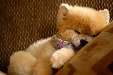 Ми-ми-ми! - Спящие собачки