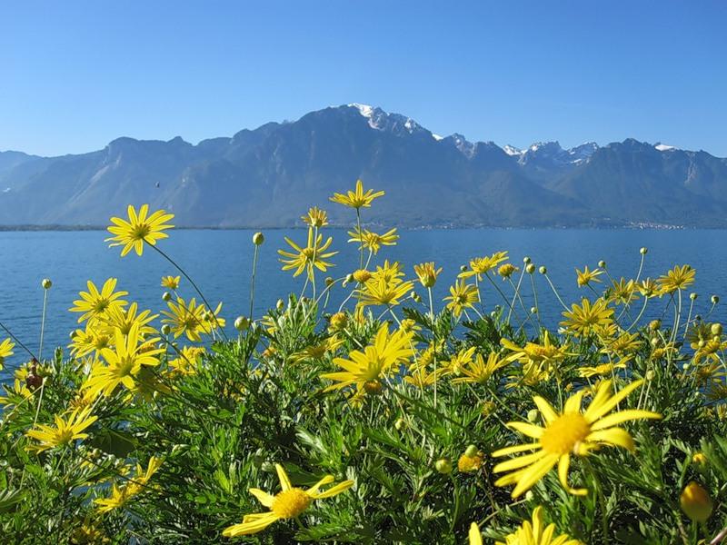Цветы швейцарских озер