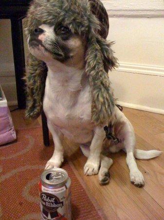Собаки-хипстеры