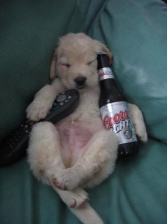 Собаки-алкоголики любящие пиво