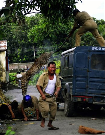 Как леопард спецназу люлей давал