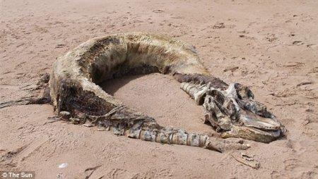 На пляже Шотландии обнаружили неизвестное чудовище