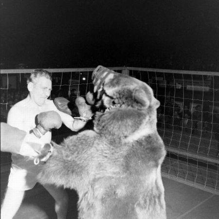 Медведь против боксера - кто кого?