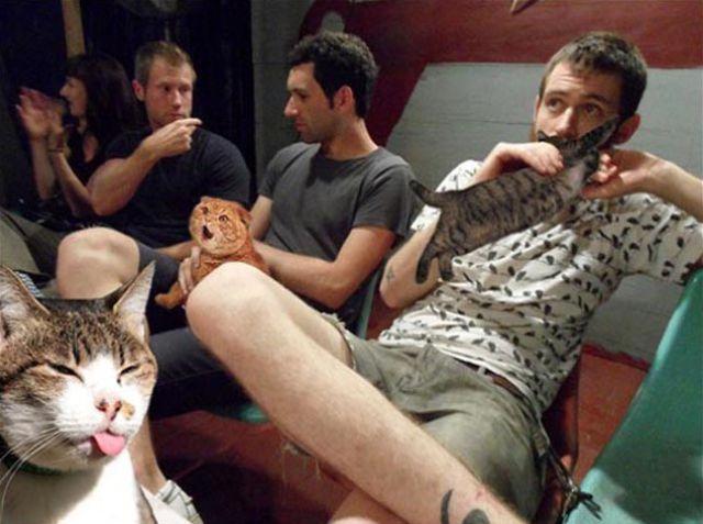 Даешь котов вместо пива!