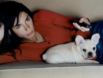 Британские собаки «подсели» на сериалы