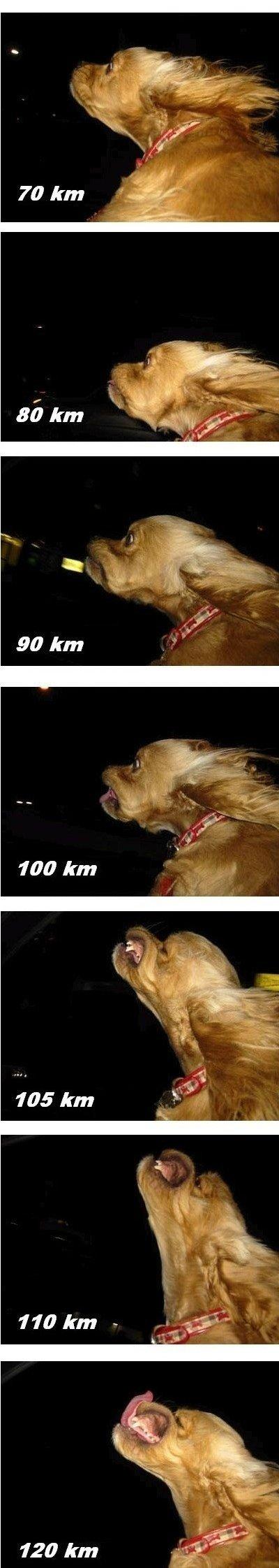 Счастье собаки